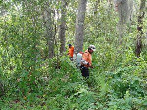 Upland Restoration Services Sarasota
